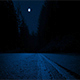 Moving Across Road Through Forest At Night - VideoHive Item for Sale