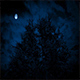 Scary Trees Under Moon On Stormy Night - VideoHive Item for Sale