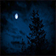 Trees Under Moon On Windy Night - VideoHive Item for Sale
