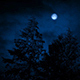 Moon And Trees On Windy Night - VideoHive Item for Sale