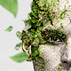 Moss Photoshop Action - GraphicRiver Item for Sale
