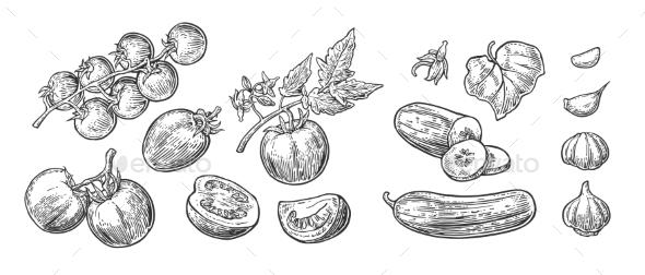 GraphicRiver Vegetables 20229428