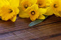 Yellow narcissus or daffodil