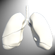 Low Poly Lungs Model - 3DOcean Item for Sale