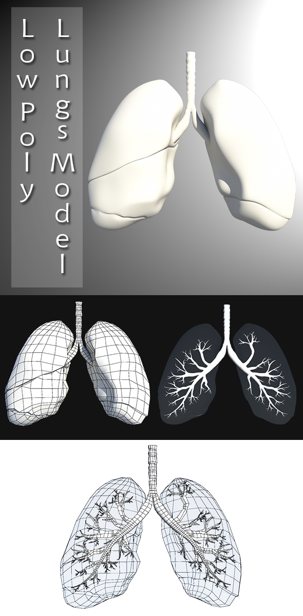 3DOcean Low Poly Lungs Model 20232494