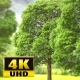Trees Background - VideoHive Item for Sale