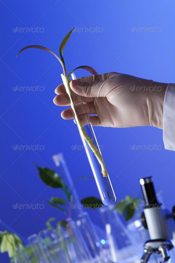 Green plants in biology laborotary - Stock Photo - Images