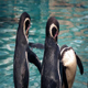 Penguins At The Zoo - VideoHive Item for Sale