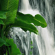 Large Plant By Jungle Waterfall - VideoHive Item for Sale