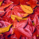 background of autumn leaves. Autumn background - PhotoDune Item for Sale