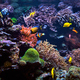 tropical Fish on a coral reef - PhotoDune Item for Sale