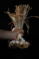 Hand Holding Bunch Of Garlic - PhotoDune Item for Sale