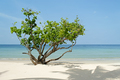 Tree on the beach, Thailand - PhotoDune Item for Sale