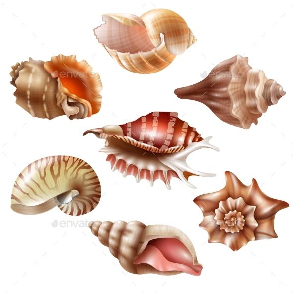 Realistic Seashell Set - Objects Vectors
