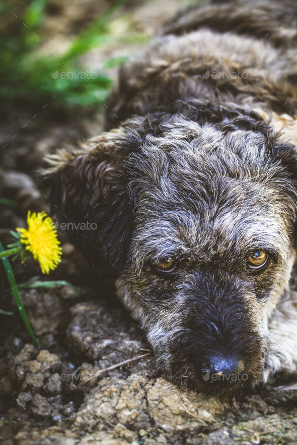 Dog in grass - Stock Photo - Images