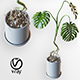 Home plant v2 (Realistic) - 3DOcean Item for Sale