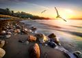 Seagulls over beach