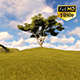 Tree On Hill 2 - VideoHive Item for Sale