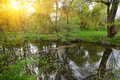 Tranquil Pond With Lush Green Woodland Park in Sunshine