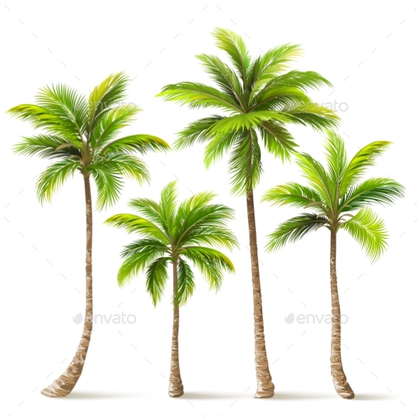Palm Trees Set. Vector - Flowers & Plants Nature