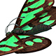 Butterfly Flapping Wings 3D Model
