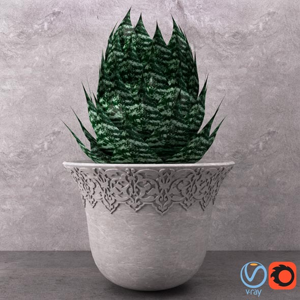 Aloe in Vase - 3DOcean Item for Sale