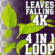 4K Falling Leaves V1 4 in 1