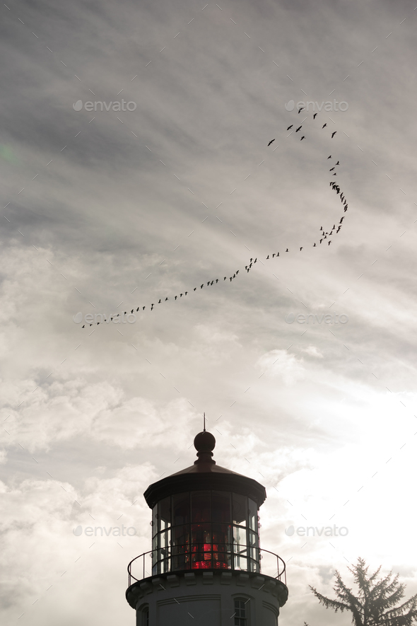 Geese Migrate Formation over Pacific Coast Lighthouse