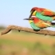 Paradise Colored Birds Are Steaming - VideoHive Item for Sale