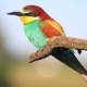 Beautiful Colorful Bird with a Multicolored Plumage