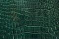 Green alligator leather, skin