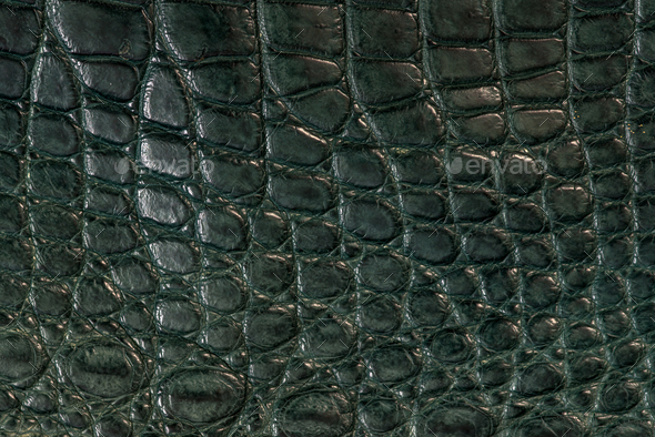 Alligator skin, leather in green colour