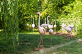 Pink flamingos in the park