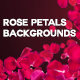 4 Rose Petals Backgrounds with Editable Text