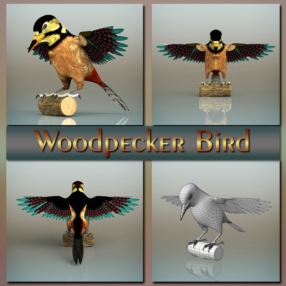 Woodpecker Bird - 3DOcean Item for Sale