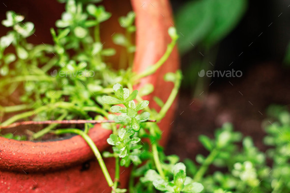 plants in pots - Stock Photo - Images