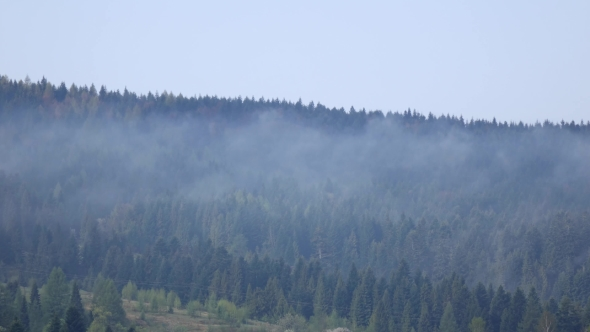 VideoHive Clouds Over Tops of Evergreen Tall Fir Trees 20265746