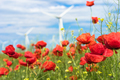 Poppy flowers in nature - PhotoDune Item for Sale