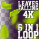 4K Falling Leaves V3 6 in 1