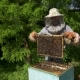 The Beekeeper Gently Pulls Out the Honeycomb From the Hive and Looks at It Watches the Honey Cell - VideoHive Item for Sale