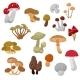 Fresh Autumn Mushrooms and Toadstools Cartoon