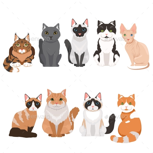 Domestic Cats in Cartoon Style. Vector - Animals Characters