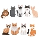 Domestic Cats in Cartoon Style. Vector