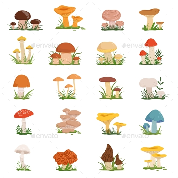 Different Mushrooms on Green Grass. Vector Set - Food Objects