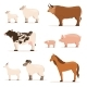 Animals on Farm. Lamb, Piglet, Cow and Sheep, Goat