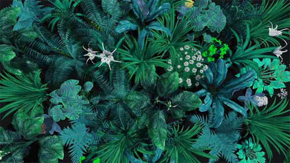 Exotic Tropical Flowers And Leaves Background By Se5d Videohive