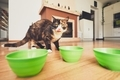 Hungry cat in the kitchen.