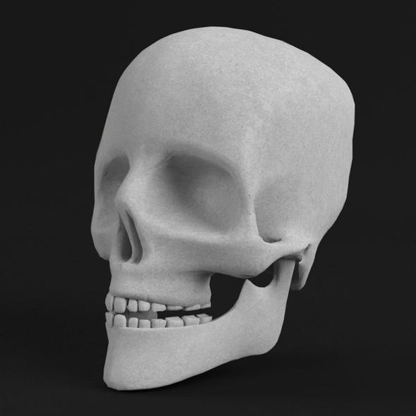 Anatomy - Human Skull - 3DOcean Item for Sale