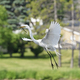 Great Egret coming in for a landing - PhotoDune Item for Sale