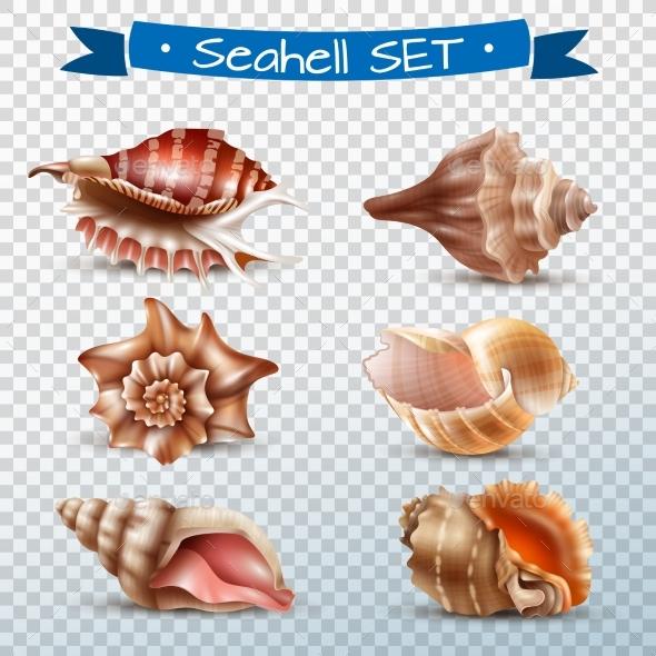 Seashell Transparent Set - Landscapes Nature
